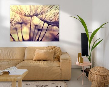 the beauty of a dandelion.. de schoonheid van een paardebloem van Els Fonteine