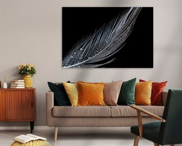 Witte veer met waterdruppels en zwarte achtergrond van Dafne Vos