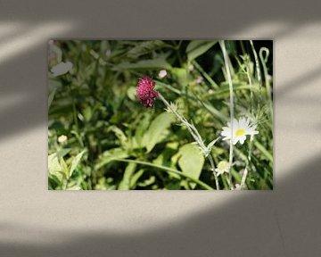 Wiesenblumen im Gras | Naturfotografie von Diana van Neck Photography