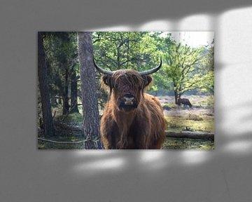 Schottischer Highlander von Emily Yilmaz
