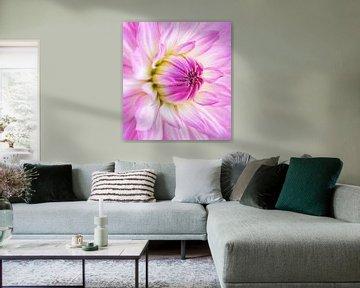 Pink dalia - Bloomquist Parasol van Lotte Veldt