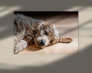 Glück ist ein Hund von Stephan Schulz
