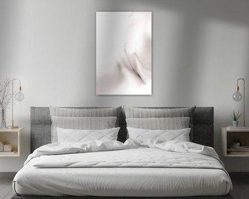 Künstlerischer Akt einer Vagina und eines Bauches in High Key Farbe