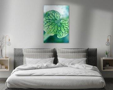 Het groene hart van Lotte Veldt