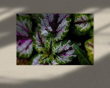 Plant paars en groen. van Dianne Peeters