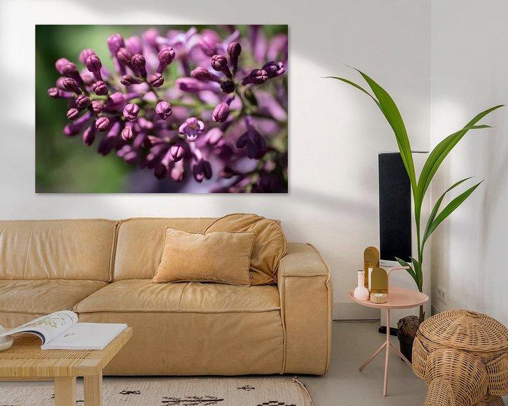 Sfeerimpressie: Close-up van paarsrode gekleurde, geurende lentebloemen van de sering of Syringa vulgaris van Henk Vrieselaar
