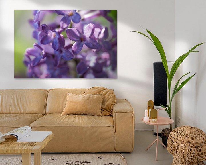 Sfeerimpressie: Close-up van prachtige paarse gekleurde, geurende lentebloemen en bloemknoppen van de sering van Henk Vrieselaar