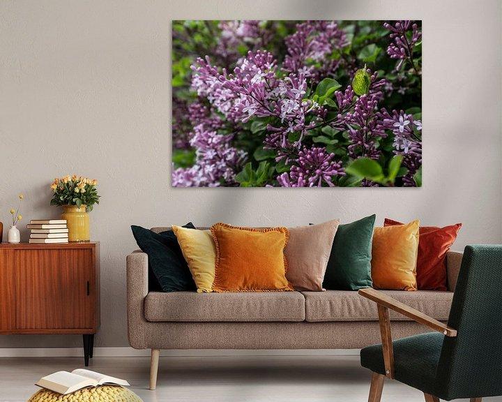 Sfeerimpressie: Struik met takken van de paarsrood gekleurde, geurende lentebloemen en bloemknoppen van de sering van Henk Vrieselaar
