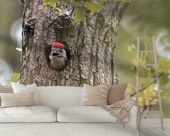 Sfeerimpressie behang: Hongerige jonge Grote Bonte Specht | Vogels van Zuid-Kennemerland van Dylan gaat naar buiten