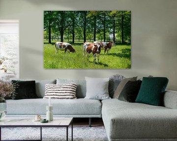 Drei Kühe stehen im grünen Gras auf einer Wiese von Sjoerd van der Wal