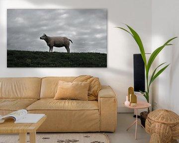 Schaf von Jeffrey Wijnen