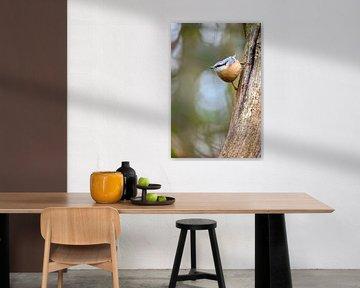 Sittelle sur Andy van der Steen - Fotografie
