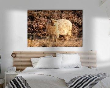 Schafe auf der Heidelandschaft von zeilstrafotografie.nl