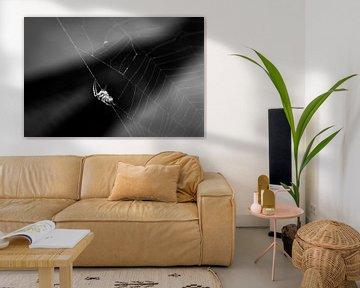 Spinnennetz von Felix Kammerlander