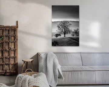 Baum im Sonnenaufgang von Felix Kammerlander