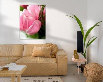 Tulpe Rosa von Delphine Kesteloot