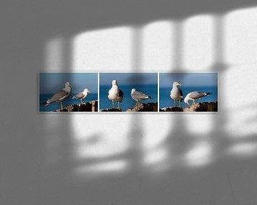 twee zilveren meeuwen op rots met zee als achtergrond uitsnede tiptiek collage van Dieter Walther
