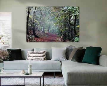 Ein nebliger Morgen im Wald von Wieland Teixeira