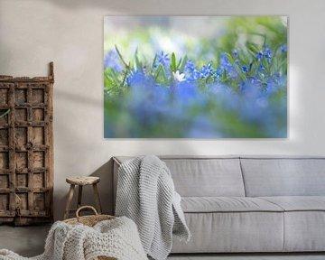 Frühling Blumen von Birgitte Bergman