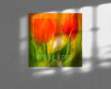 Tulpe | mit Text von Rob van der Pijll