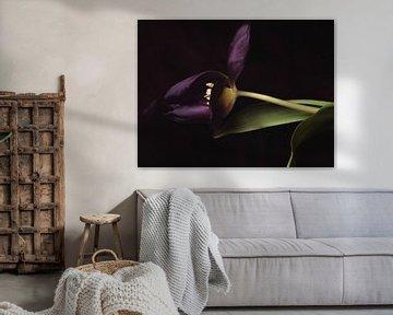 Lila einzelne Tulpe von Ineke VJ