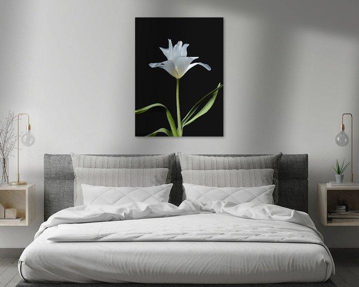 Beispiel: Weiße Tulpe von Ineke VJ