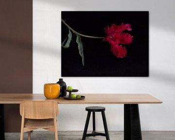 Rote Tulpe mit Fransen von Ineke VJ