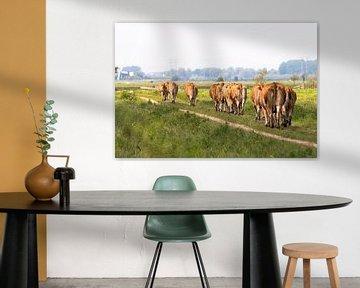 Ausgelaufene Kühe von Apple Brenner