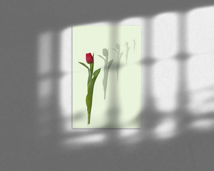Beispiel: DIE Tulpe von Klaartje Majoor