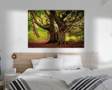 Bomen op Rügen van Martin Wasilewski