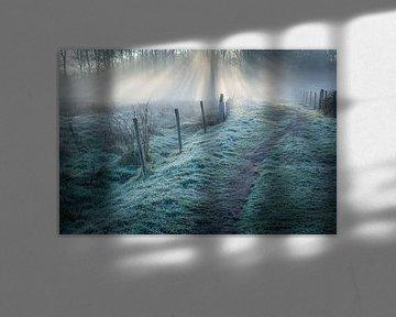 The beaten path van Diane Cruysberghs