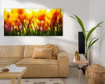 Blumenzwiebelfelder von Henk Leijen