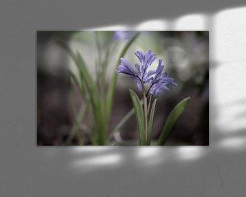 bloemen part 80 van Tania Perneel