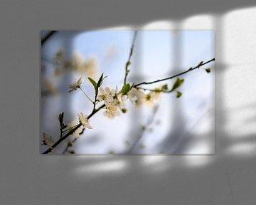 bloemen part 81 van Tania Perneel