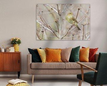 Tjiftjaf in de Gelderse roos (Viburnum opulus)