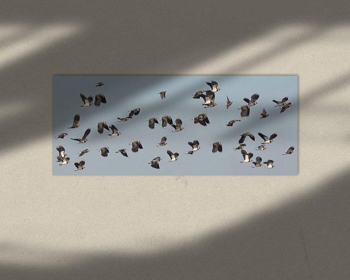 Beispiel: Kiebitze füllen die Luft von Eric Wander