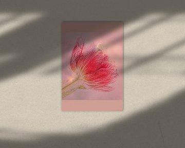 Ein Frühlingsbote in Rot von Mieneke Andeweg-van Rijn