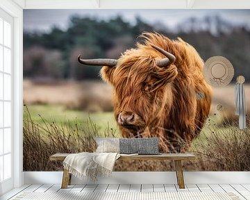 Schotse Hooglander in de storm van John van den Heuvel