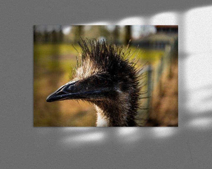 Beispiel: Ein schöner Emu mit schönem Licht im Hintergrund. von Bram van Egmond