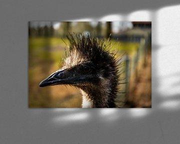 Ein schöner Emu mit schönem Licht im Hintergrund. von Bram van Egmond