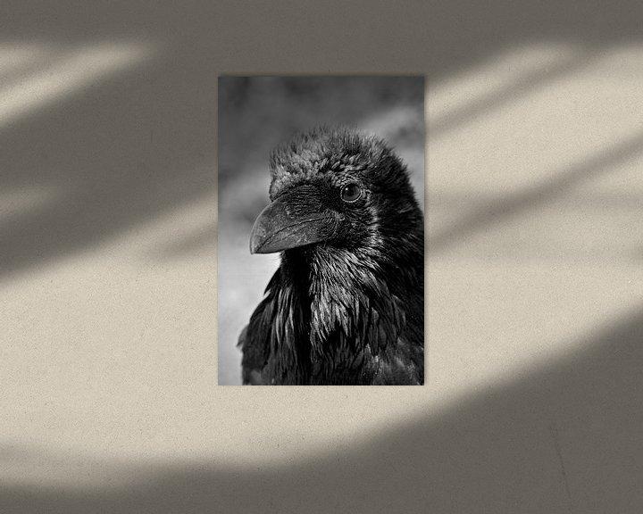 Beispiel: Porträt einer Krähe in den Vereinigten Staaten von Carolina Reina