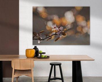 Blüten in der Morgensonne von Lindy Schenk-Smit