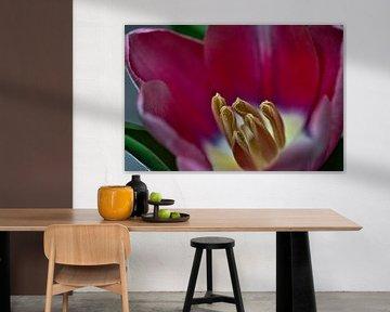 Nahaufnahme Tulpe von Lindy Schenk-Smit