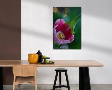 rosa Tulpe mit Bokeh von Lindy Schenk-Smit