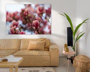 Magnolia bloesem met bokeh effect tegen een mooie blauwe achtergrond van Kim Willems