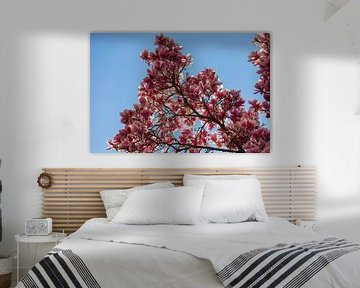 Magnolienblüte vor einem schönen blauen Hintergrund mit durchscheinenden Sonnenstrahlen von Kim Willems