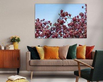 Magnolienblüte vor einem schönen blauen Hintergrund von Kim Willems