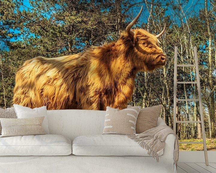 Sfeerimpressie behang: Schotse Hooglanders van Freddie de Roeck