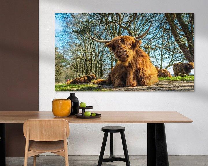 Sfeerimpressie: Schotse Hooglanders van Freddie de Roeck