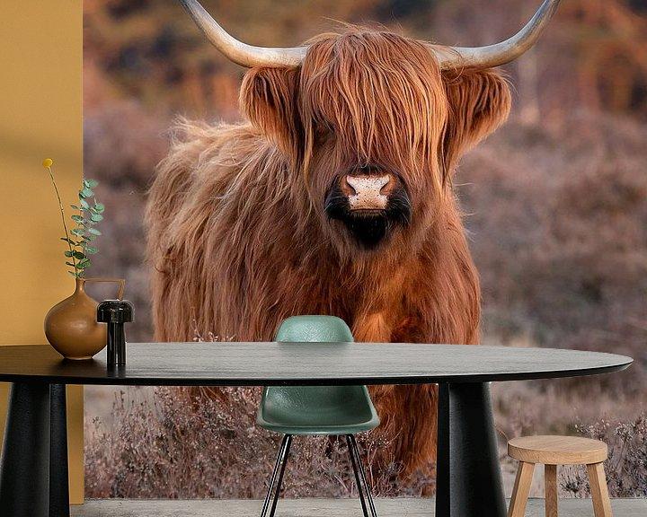 Beispiel fototapete: Schottischer Highlander auf der Heide von Danielle Bosschaart
